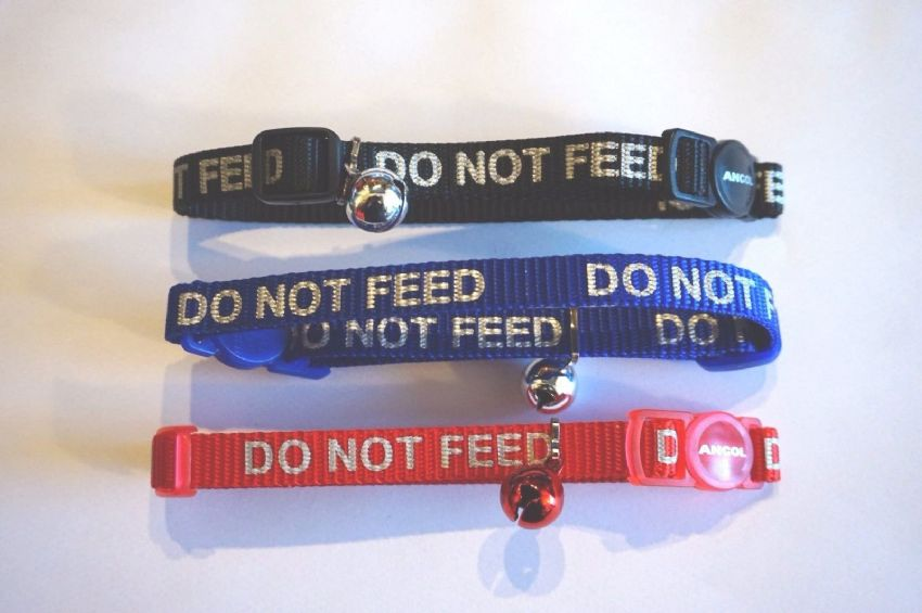 A  COLLAR WITH DO NOT FEED LETTERING   REFLECTIVE + BELL AND RELEASE SNAP BUCKLE